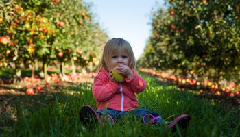 Young girl sat tasting apple among apple trees