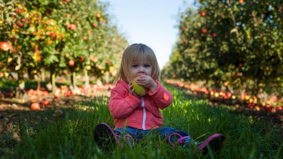 Young girl sat tasting apple among apple trees